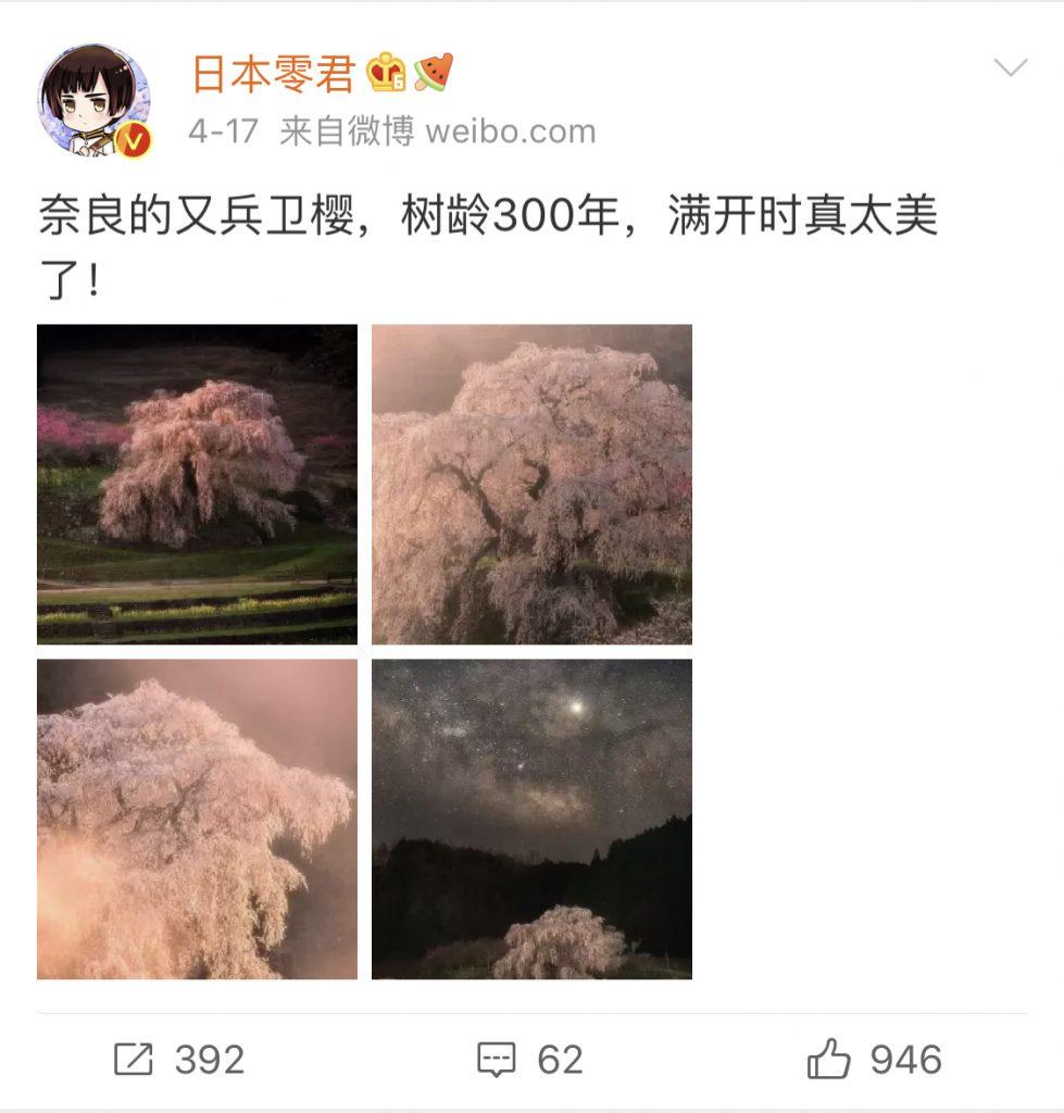 日本零君4月度のおすすめ観光地として奈良の300年桜を紹介した投稿